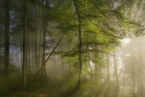 Morning Beauty by Norbert Maier
