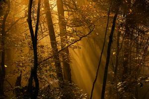 Morning Rays by Norbert Maier