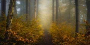Take me for a Walk by Norbert Maier