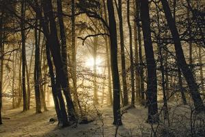 winter morning by Norbert Maier