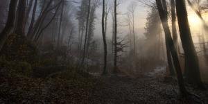 Winter's Slight Return by Norbert Maier