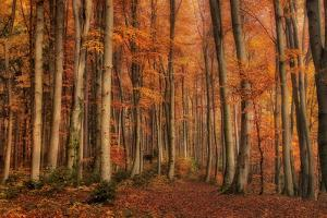 Winter's Soon to Come by Norbert Maier