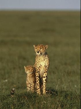A Portrait of a Female Cheetah and Her Cub by Norbert Rosing