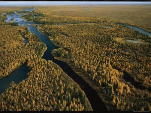 Aerial View of Forested Land and River in Wapusk National Park by Norbert Rosing