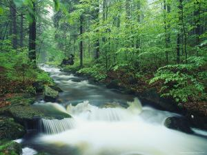 Fast Moving Stream Cuts Through a Beautiful Lush Forest by Norbert Rosing