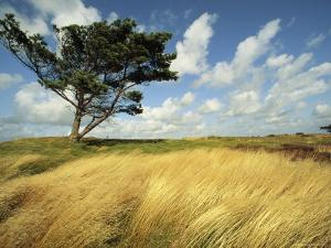 Heathland on the Island of Hiddensee in the East Sea by Norbert Rosing