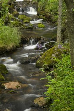 Moss-Covered Boulders, Wildflowers, and Trees, Border the Rushing Kleine Ohe Creek by Norbert Rosing
