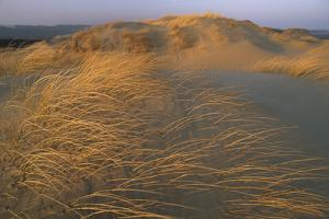 Sand Dunes Covered with Beach Grass by Norbert Rosing