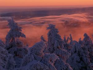Snow-Draped Trees and Distant Mountain Ridges at Twilight by Norbert Rosing