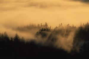 Spruce Trees Covered with Fog in Winter During Sunrise by Norbert Rosing