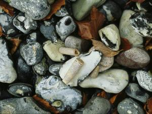Stones and Shells at Beach, Close View, Jasmund National Park by Norbert Rosing