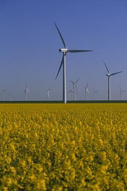 Windmill Park in Blooming Rape Field by Norbert Rosing