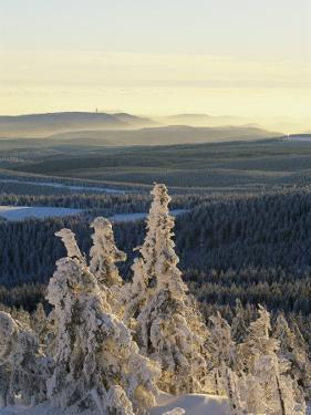 Winter Scenic on Mountain Top, Evergreens in Snow by Norbert Rosing