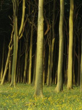 Woodland Scene, Jasmund National Park, Germany by Norbert Rosing