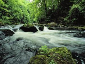 Woodland Stream and Rapids, Time Exposure by Norbert Rosing
