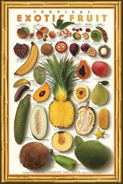 Tropical Exotic Fruit by Norman Van Aken