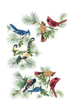 North Am Birds Cutup