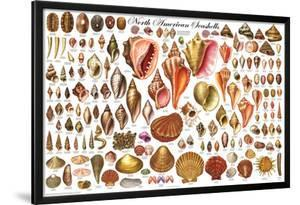 North American Shells Educational Science Chart Poster