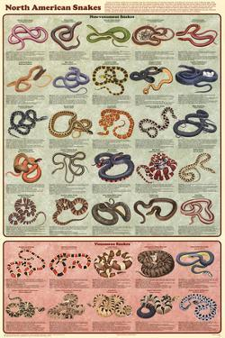 North American Snakes Educational Science Chart Poster