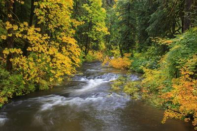 https://imgc.allpostersimages.com/img/posters/north-fork-silver-creek-silver-falls-state-park-oregon-usa_u-L-PN6S7Y0.jpg?p=0
