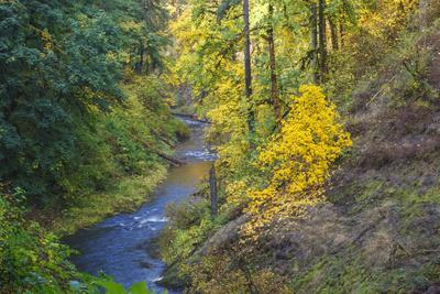 https://imgc.allpostersimages.com/img/posters/north-fork-silver-creek-silver-falls-state-park-oregon-usa_u-L-PN6U180.jpg?artPerspective=n