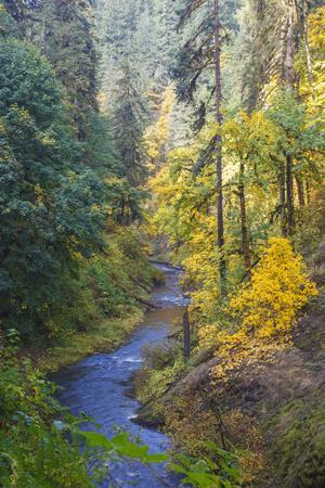 https://imgc.allpostersimages.com/img/posters/north-fork-silver-creek-silver-falls-state-park-oregon-usa_u-L-PN6U1N0.jpg?p=0