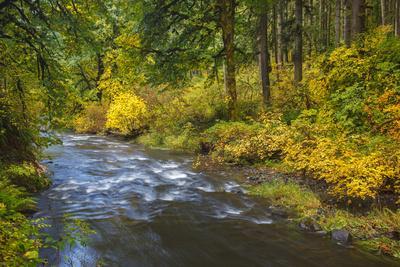 https://imgc.allpostersimages.com/img/posters/north-fork-silver-creek-silver-falls-state-park-oregon-usa_u-L-PN6U220.jpg?p=0