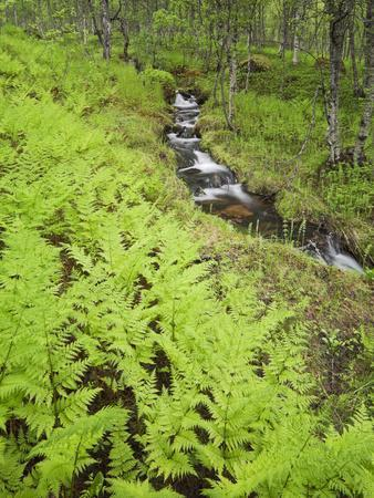 https://imgc.allpostersimages.com/img/posters/norway-northern-country-fern-brook_u-L-Q11YX4O0.jpg?artPerspective=n
