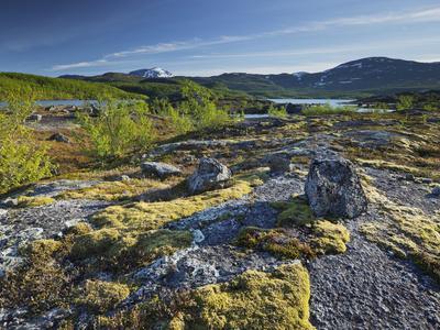 https://imgc.allpostersimages.com/img/posters/norway-northern-country-narvik-sirkelvatnet-moss-rock_u-L-Q11YOK50.jpg?p=0