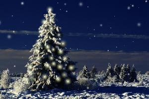 Norway Spruce Tree with Lights On