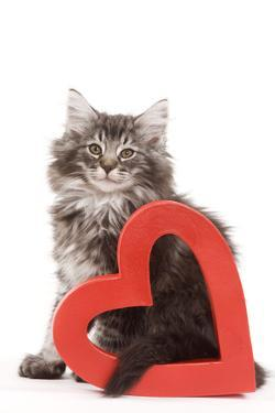 Norwegian Forest Kitten Sitting with Red Cut-Out Heart
