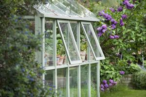 Greenhouse in Back Garden with Open Windows for Ventilation by Nosnibor137