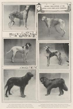 Notable Prize-Winners at the Kennel Club's Forty-Sixth Exhibition