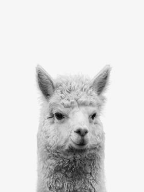 Alpaca by NUADA