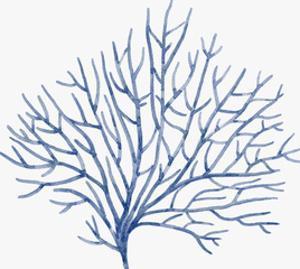 Blue Coral 1 by NUADA
