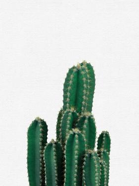 Cactus by NUADA