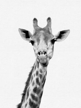 Giraffe by NUADA