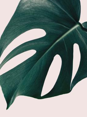 Monstera Close Up Pink by NUADA