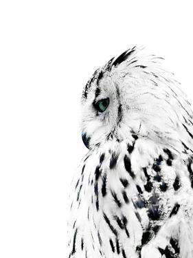 Owl by NUADA