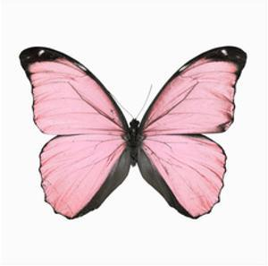 Pink Butterfly by NUADA