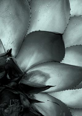 Succulent 3 by NUADA