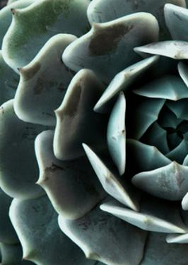 Succulent 4 by NUADA