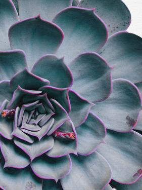 Succulent Close Up by NUADA