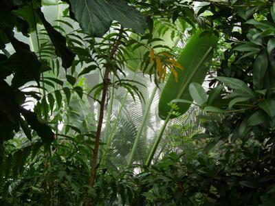 Misty Jungle by numismarty