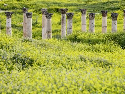 Roman columns rising above field of wildflowers
