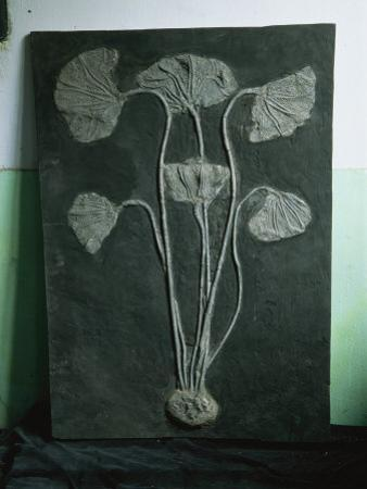 A Fossil of a Crinoid, a Type of Sea Lily That Lived in the Sea