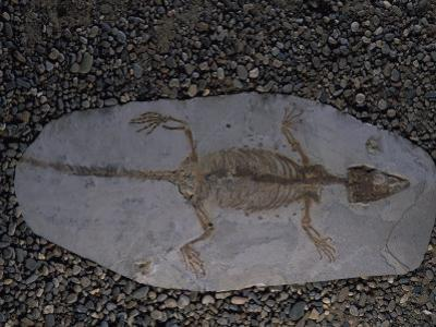 Fossil of Lizard-Like Creature, China