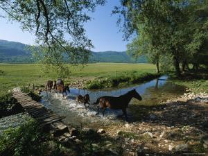 Wild Horses Cross a Stream near Montenero Val Cocchiara by O. Louis Mazzatenta