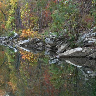 https://imgc.allpostersimages.com/img/posters/oak-hickory-forest-along-lee-creek-devil-s-den-arkansas-usa_u-L-Q1CZZ3X0.jpg?p=0