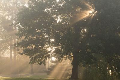 https://imgc.allpostersimages.com/img/posters/oak-tree-with-sun-rays-in-misty-morning_u-L-Q1EXXBU0.jpg?artPerspective=n